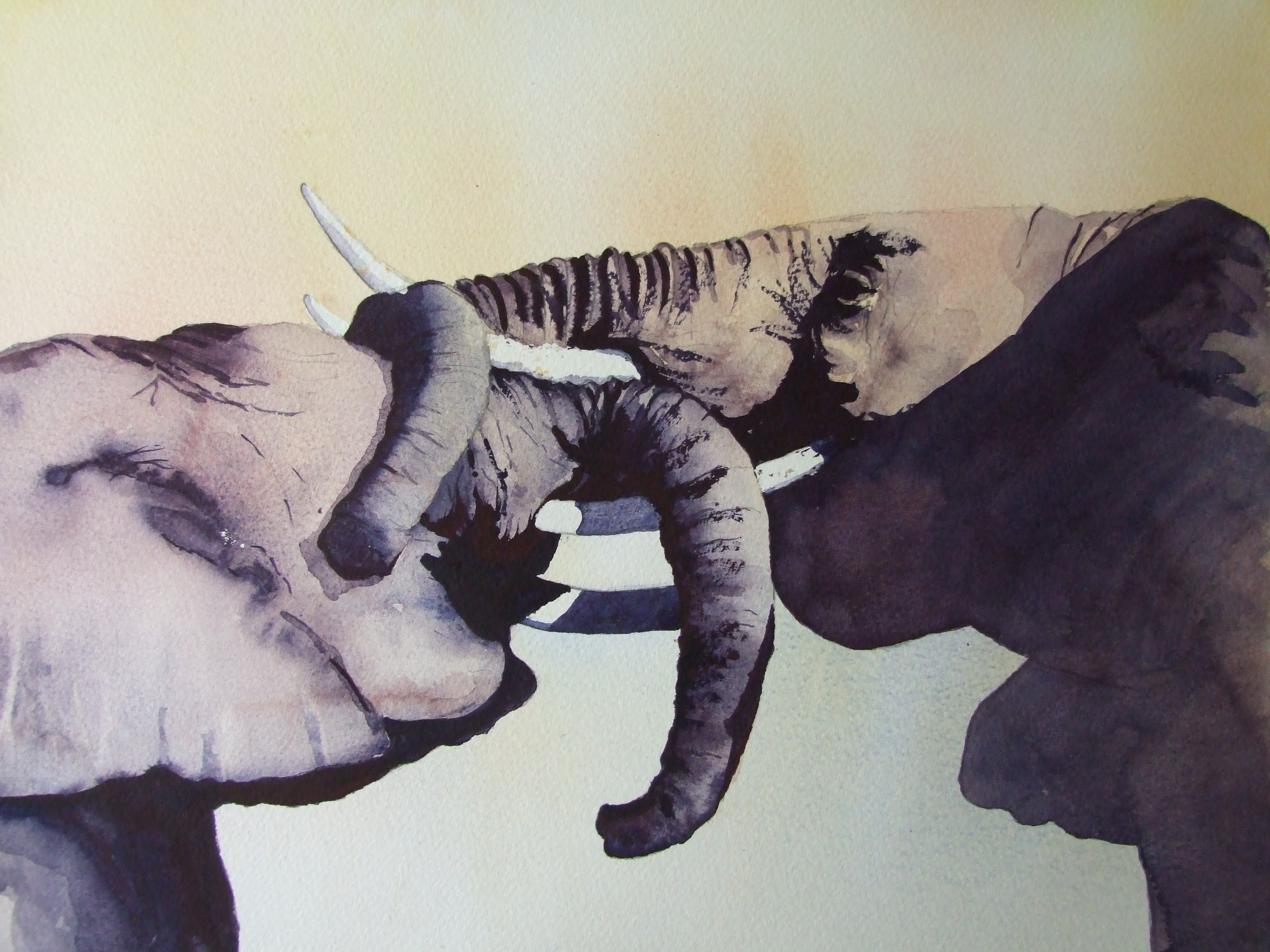 Young_Elephants_Playfighting