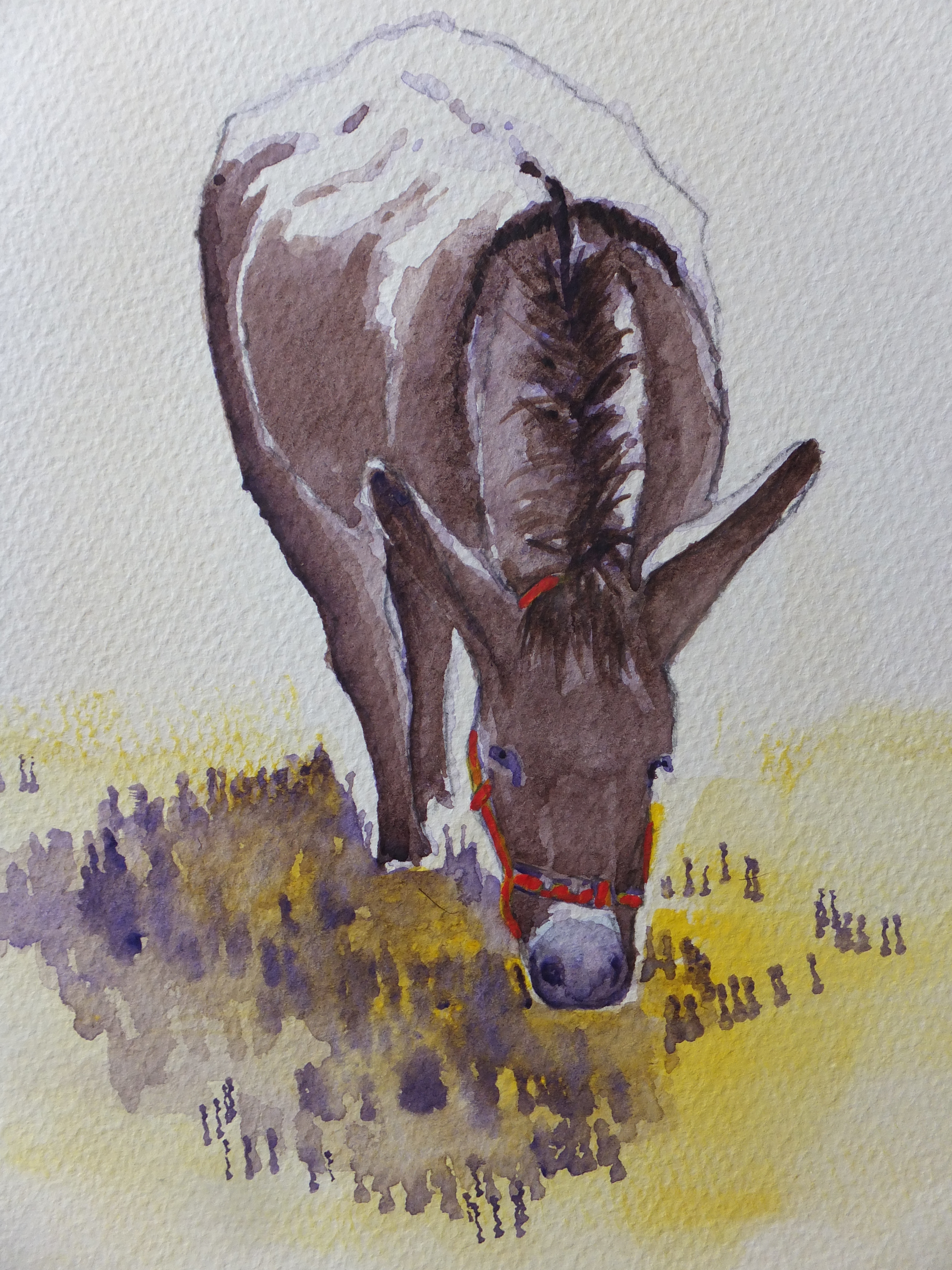 the-contented-donkey