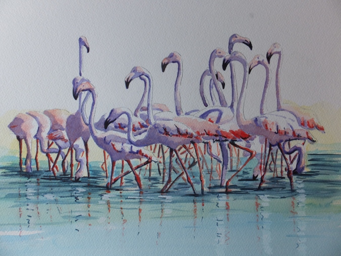 flamingos-in-the-camargue