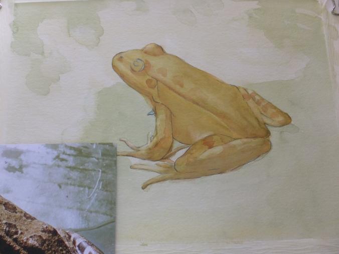 Little Frog Part Finished